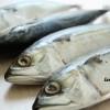 kalori ikan kembung