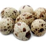 kalori telur puyuh
