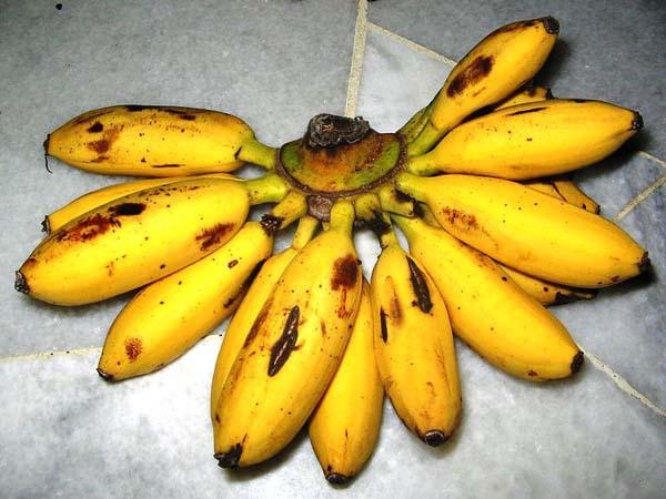 kalori pisang mas